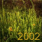 martirene-2002